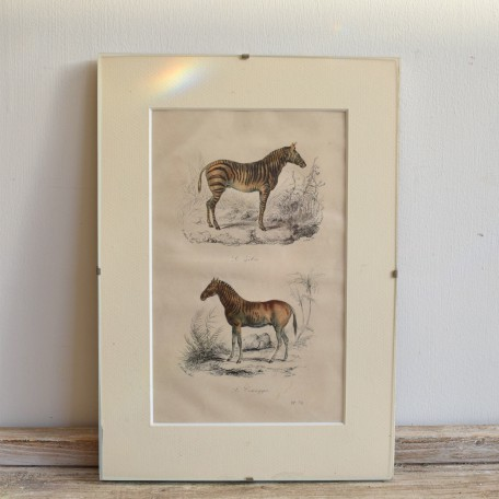 vintage french zoological prints