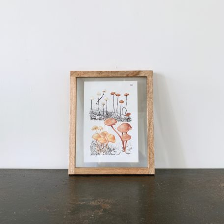Contemporary wood and clear glass frames with vintage Mushroom colour illustrations