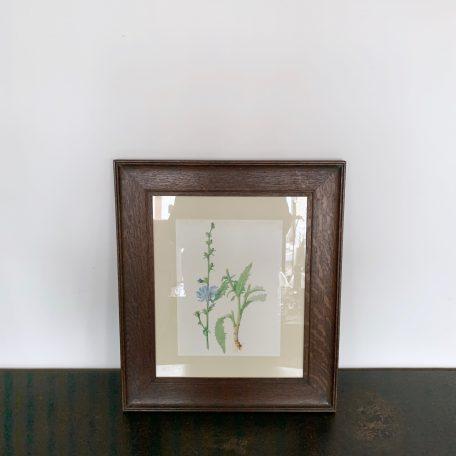 Vintage Framed Botanical Print