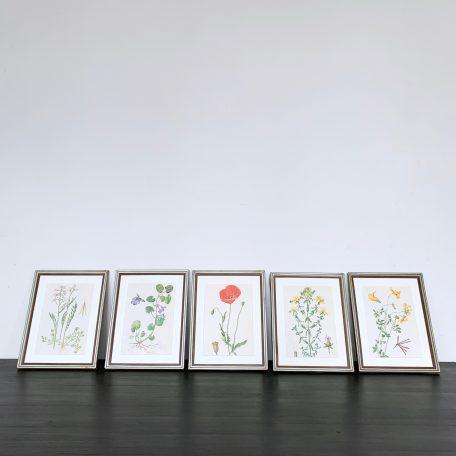 Wild Flower Plates in Vintage Metal Frames